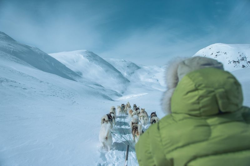 A true winter adventure - dog sledding in Greenland